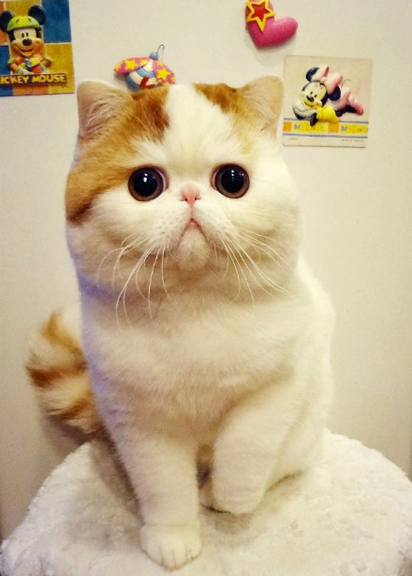 30 Most Adorable and Cutest Cat Photos Collection - Vote ...