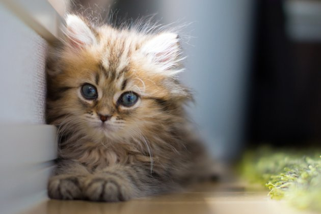 Worlds Cutest Kitten Photo