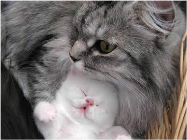 adorable kitten with mom cat