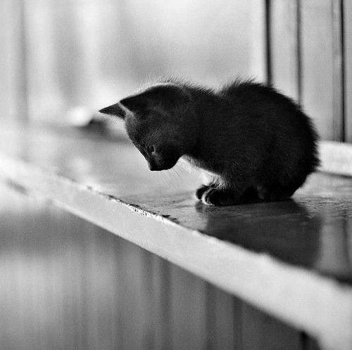 black cute cat sitting on window sil