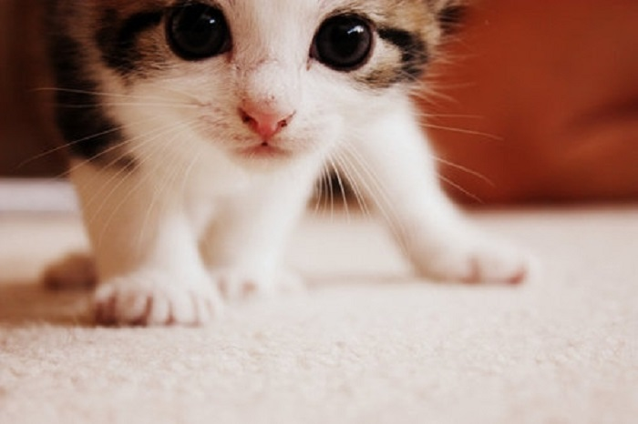 cute-and-adorable-cat-photo.jpg