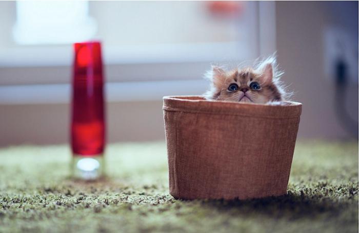 cute cat in cap
