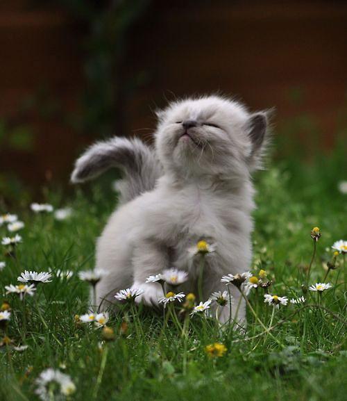 cute cat in flowers