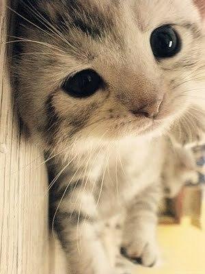 cute kitten lying down