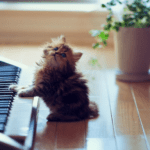 cute kitten playing piano