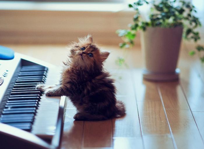 cute kitten playing piano