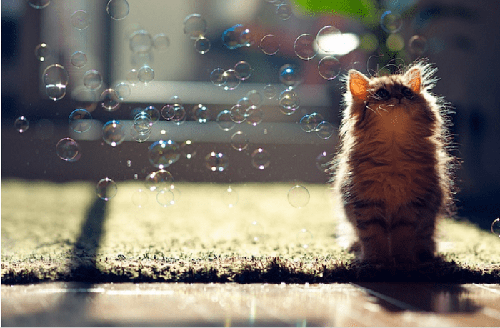 cute kitten playing with bubbles