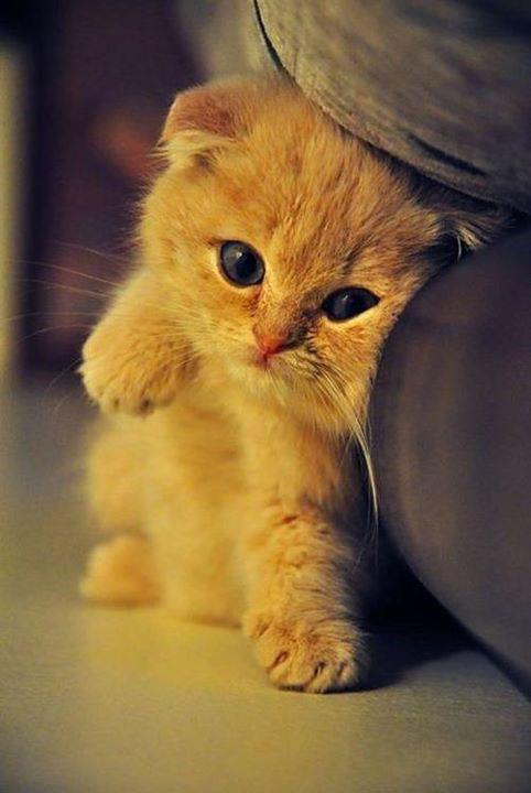 cute kitty waiting