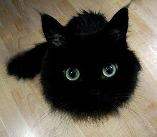 cutest black kitty