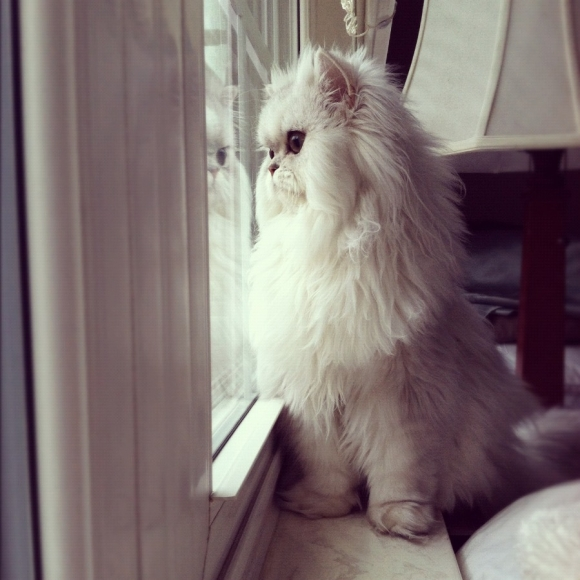 fluffiest cat