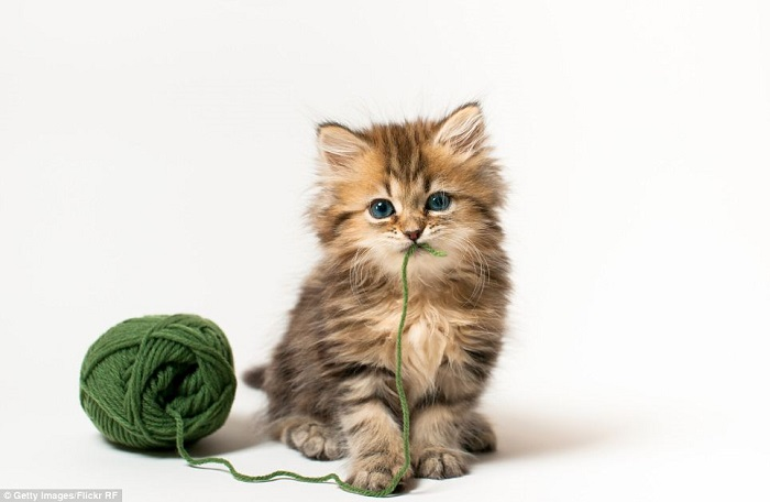 30 Most Adorable and Cutest Cat Photos Collection - Vote