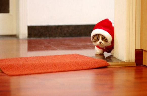 Sneaky Santa Cat