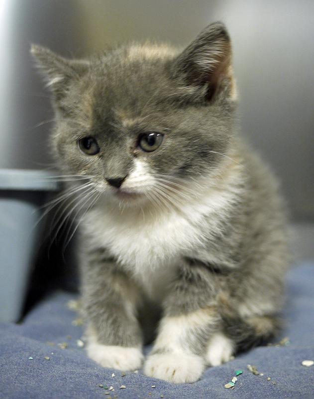 most innocent cat photo