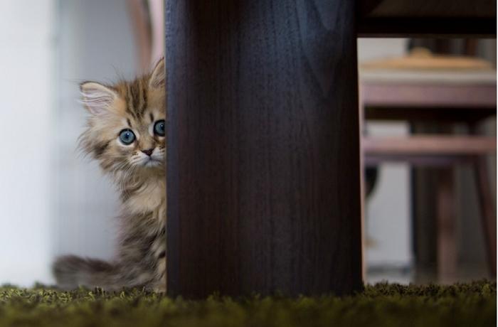 scared sad cat photo