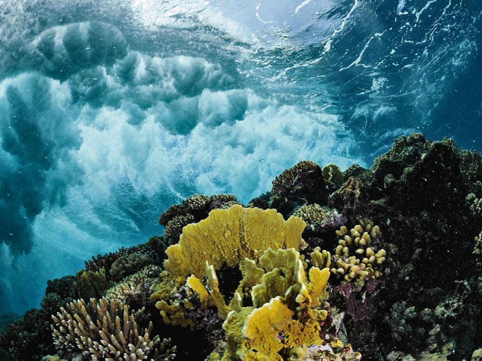 Coral Reef, Red Sea