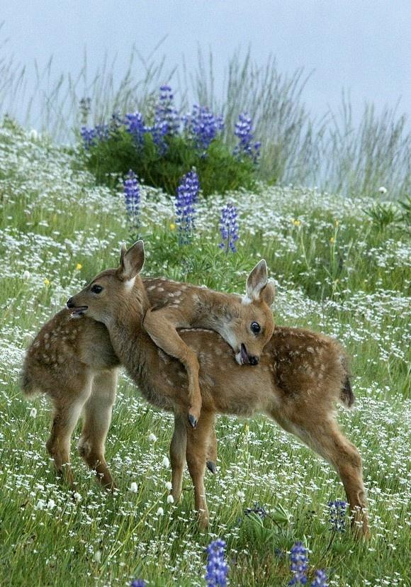 Deer Hug