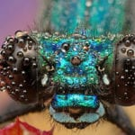 Beautiful Insect Macro Photography