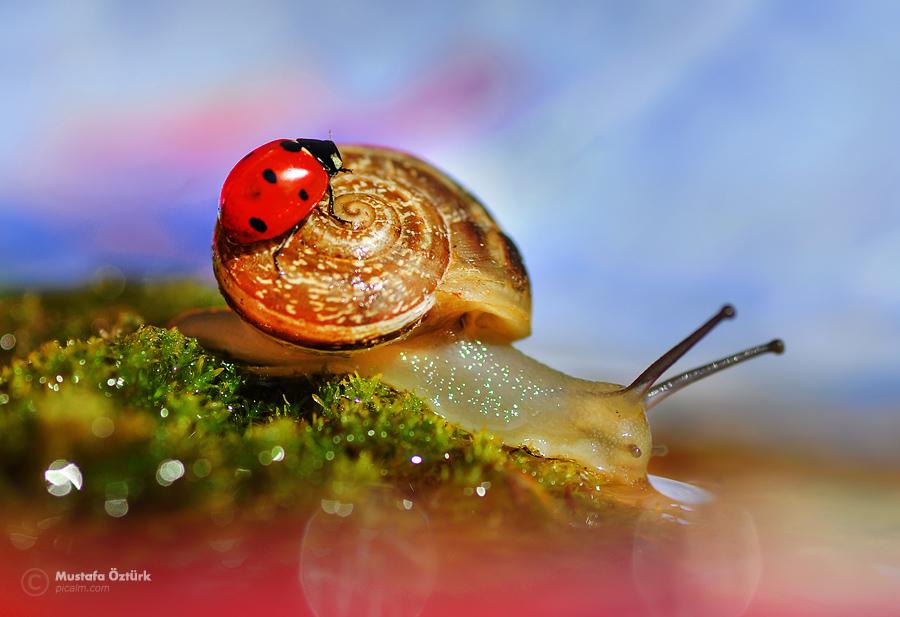 Ladybug and Snail