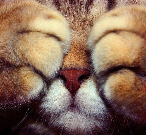 Lion Cub Peekaboo