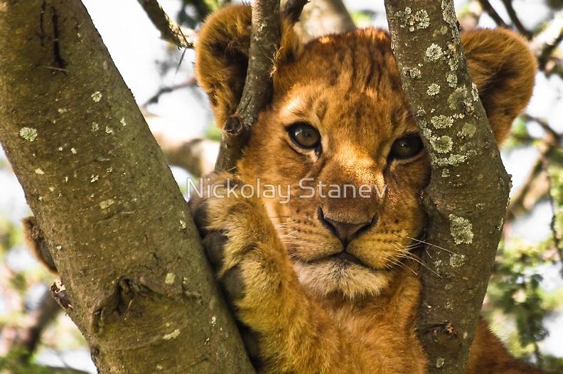 Lion Cub Sitting On Tree Branch