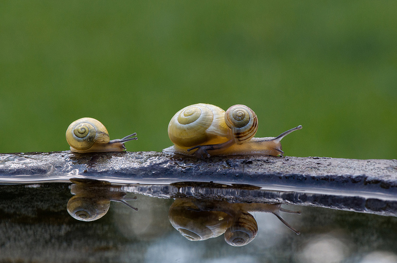 Cutest Snail Family