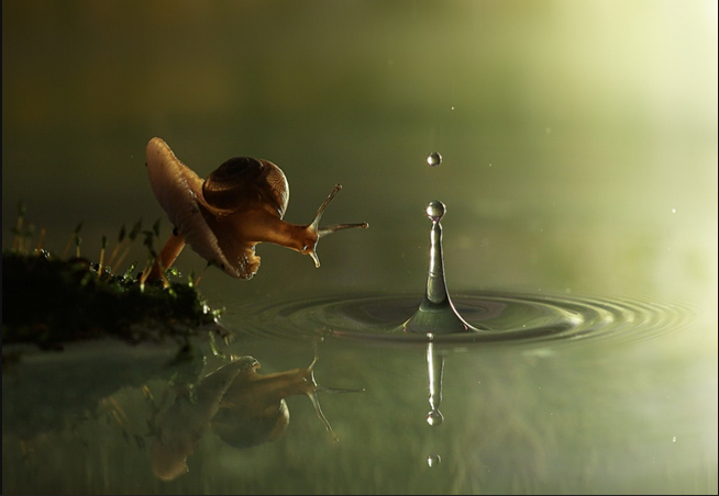 Snail and Raindrop