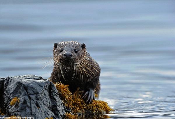 The Riverside Otter