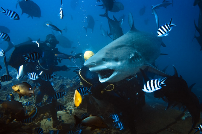 Untamed underwater life