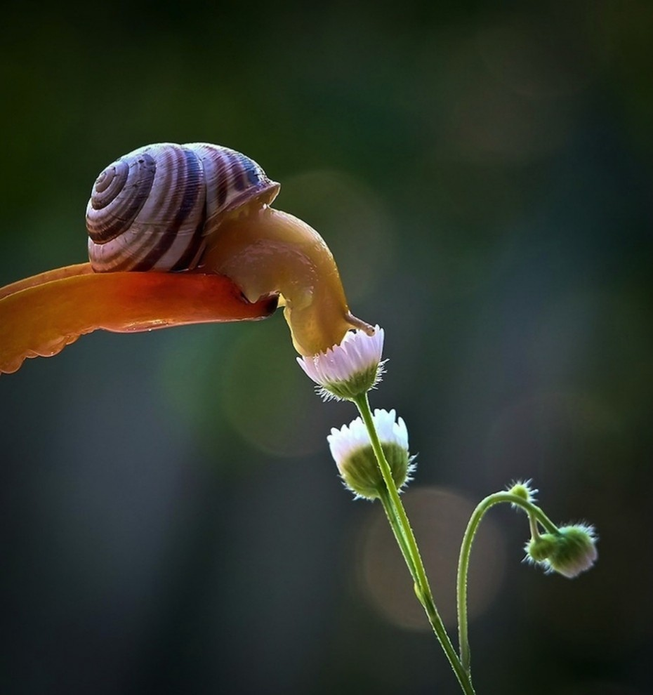 snail-smelling-flower-930x990 - Stop and smell the flowers - Photos Unlimited
