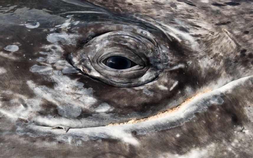 whales-eye