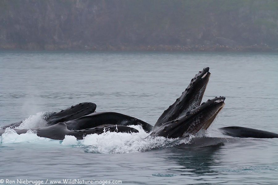 Incredible Collection of Whale Photos - Magnificent Nature ...