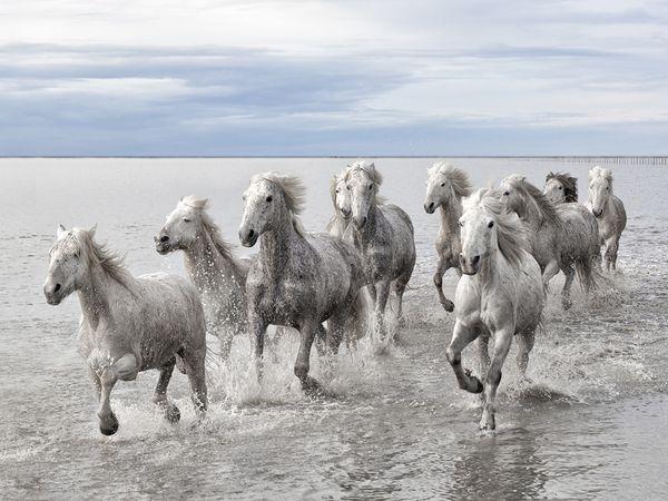 wild-horses-camargue