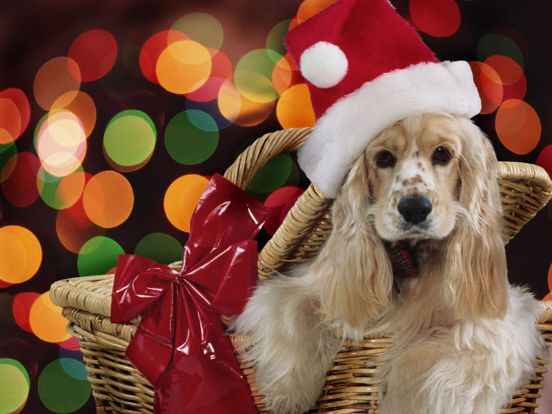 Christmas Cute Dog