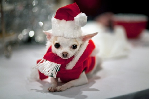 Cute-And-Small-Christmas-Animals-Fluffy-Christmas