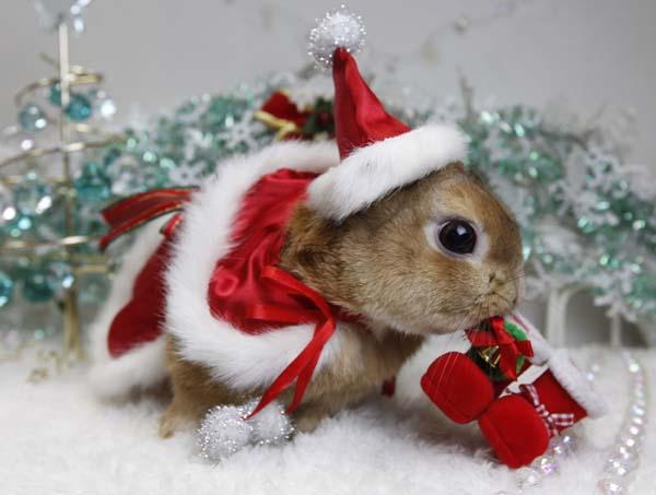 Hình nền Noel dễ thương đẹp nhất 2016
