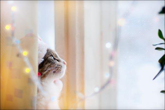 Cute-Christmas-Animals-07