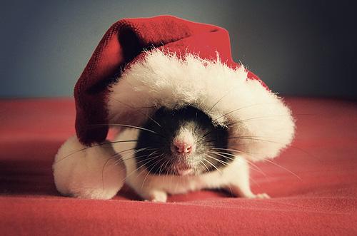 Cute-Christmas-Animals-30