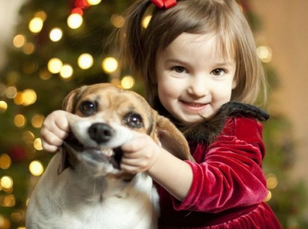 Beautiful Animals In Christmas Photography 20 Photos Of