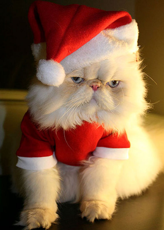 Cute christmas animals - photo#14