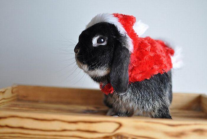 Funny-Christmas-animals17