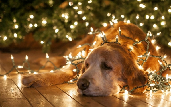 Beautiful Animals In Christmas Photography 20 Photos Of Cute