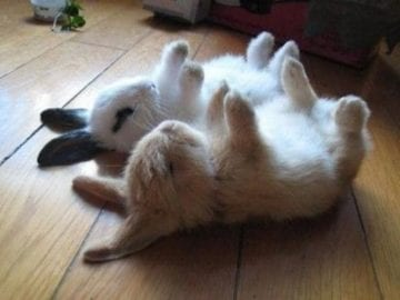 funny_bunnies_sleeping_picture