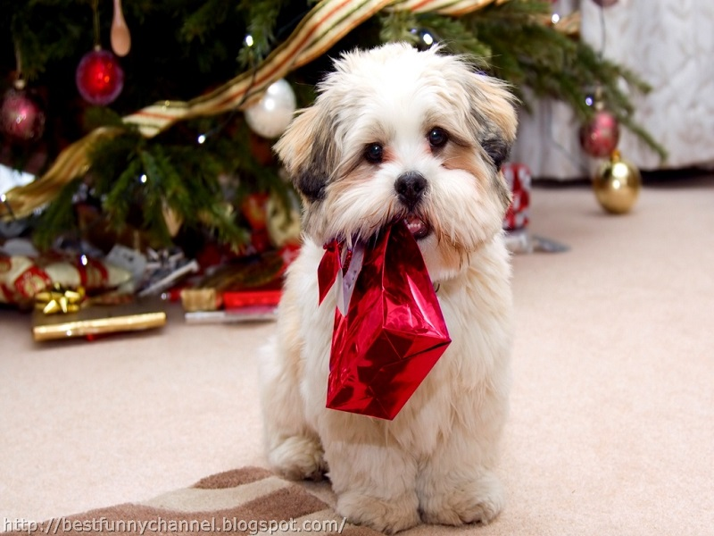 Beautiful Animals in Christmas Photography - 20 Photos of Cute ...