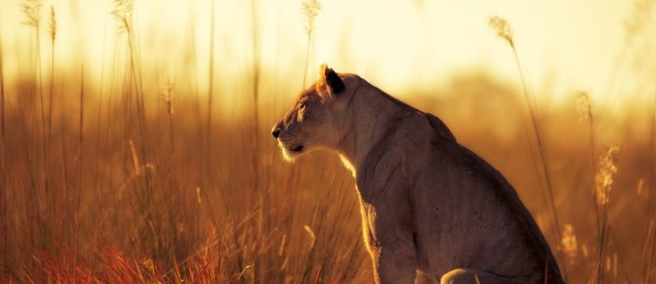 Beautiful Photos Of Animals In Sun