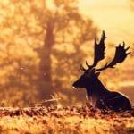 nature animals deer sunlight