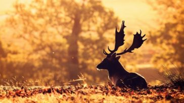 nature animals deer sunlight