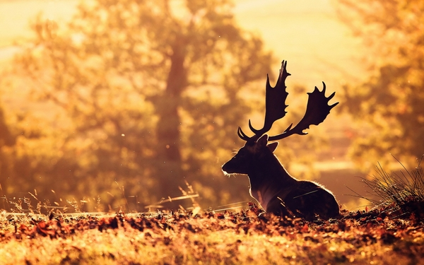 Beautiful Pictures Of Nature And Animals nature animals deer sunlight