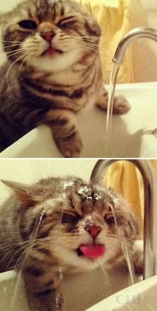 20 Awesome Cat Gifs You have Never Seen Before - Cute Cat Gifs to ...