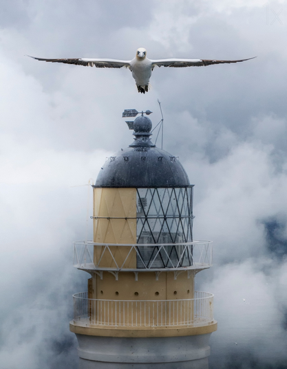 Bass Rock Lighthouse - bird photography - nature photography