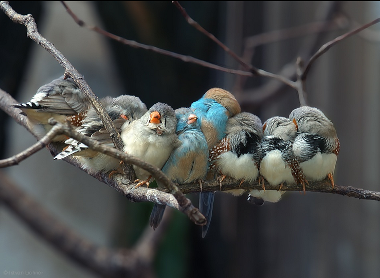 Siesta - bird photography - nature photography